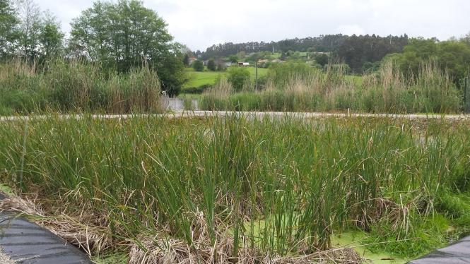 EDAR de Cullergondo Xuanzo ejecutada por Augas de Galicia en el marco del proyecto Life AquaPlann